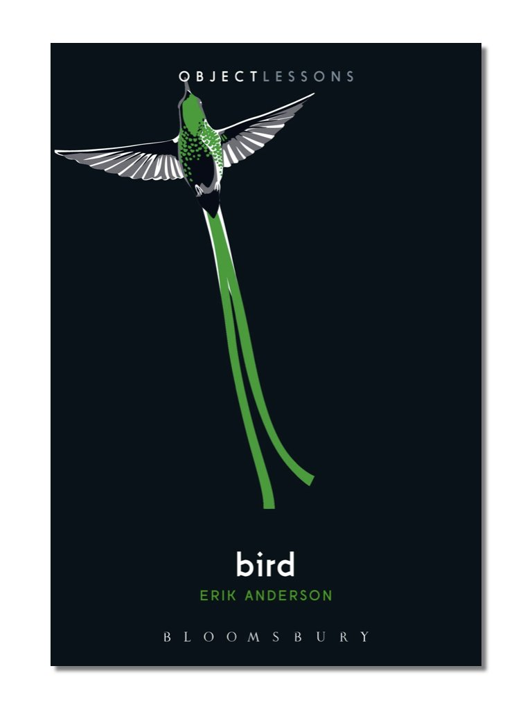 Object Lessons: Bird