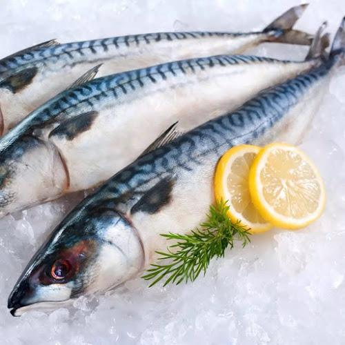 Mackerel Fish 3 Pack