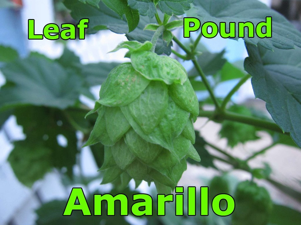 Hops - Amarillo Leaf Hops 1 LB (US)