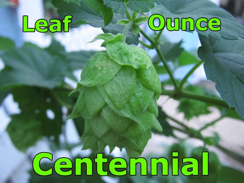 Centennial Leaf Hops 2 oz (US)