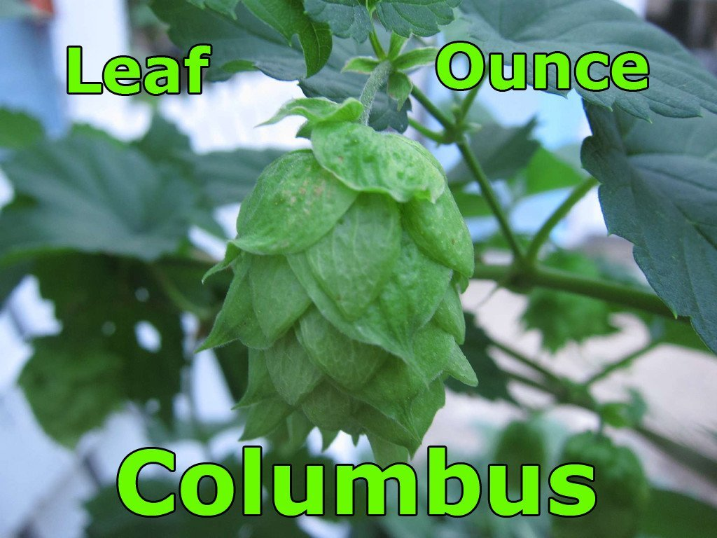Hops - Columbus Leaf Hops 1 OZ (US)