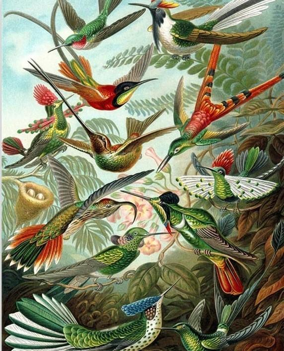 Hummingbirds - Ernst Haeckel paint by numbers canvas for adults from paint pots