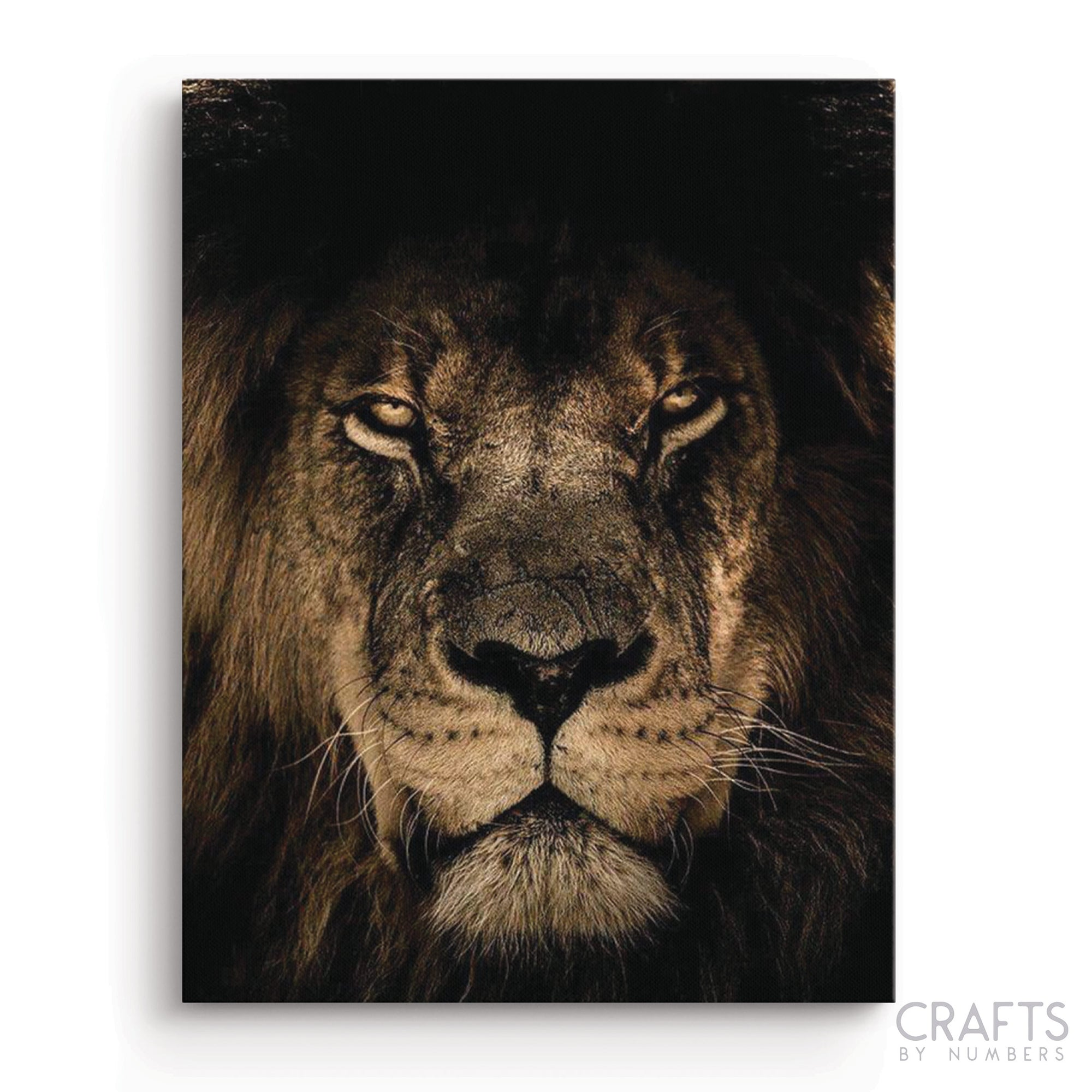 Golden Lion King paint by numbers canvas for adults from paint pots