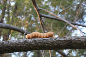 Wooden Caterpillar