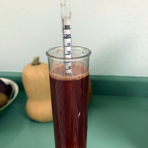 Hydrometer Reading in Specific Gravity Scale for Home Cider