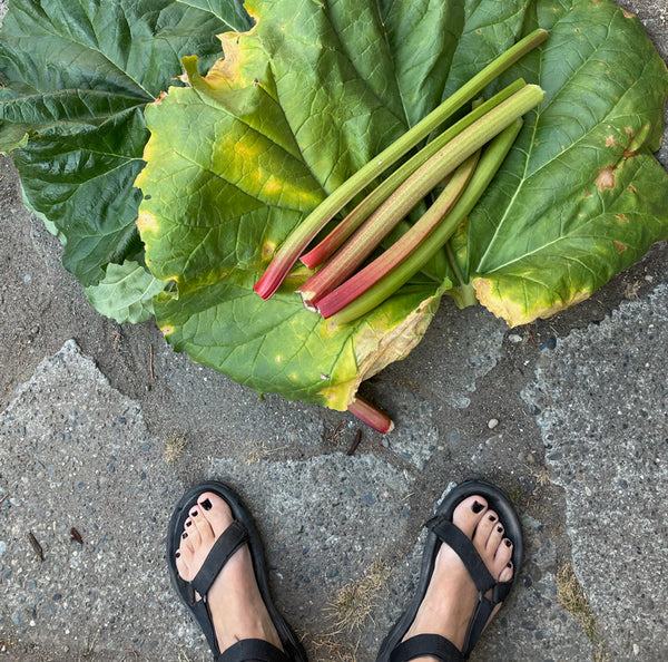 Rhubarb with Feet for Scale