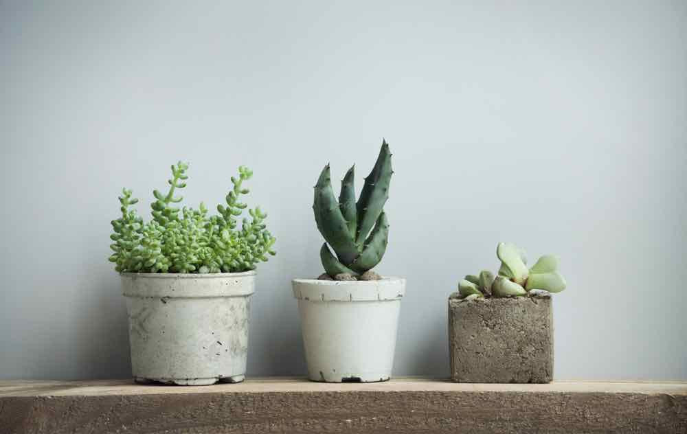 Houseplants: what to choose and how to look after them