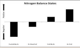 N-PRO: The Key to a Positive Nitrogen Balance