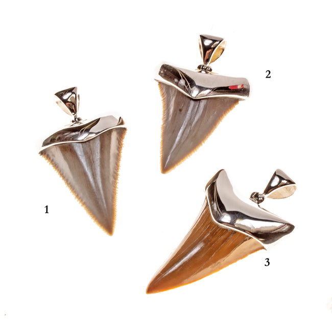 Sterling Silver Megalodon Tooth Pendant