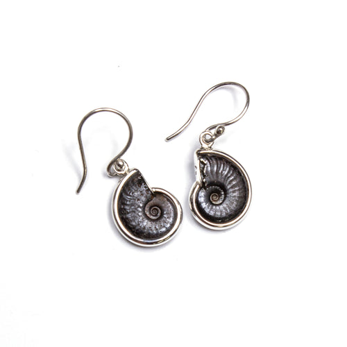 SS Ammonite Bezel Dangle Earrings