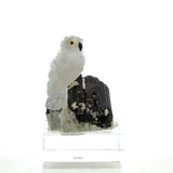 Carved White Quartz Snowy Owl on Black Tourmaline Sculpture