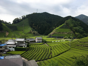 Landscape of tea farm in Shizuoka, Japan