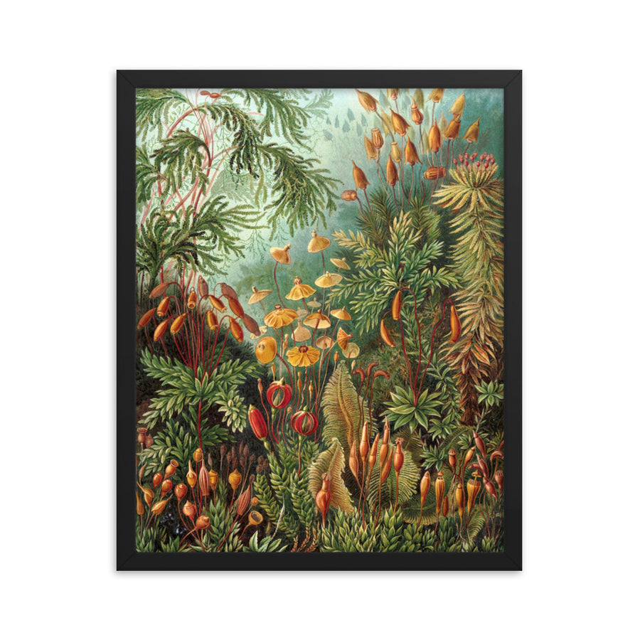 Garden Plants - Framed Print