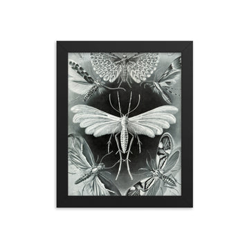 Grey Moth - Framed Print