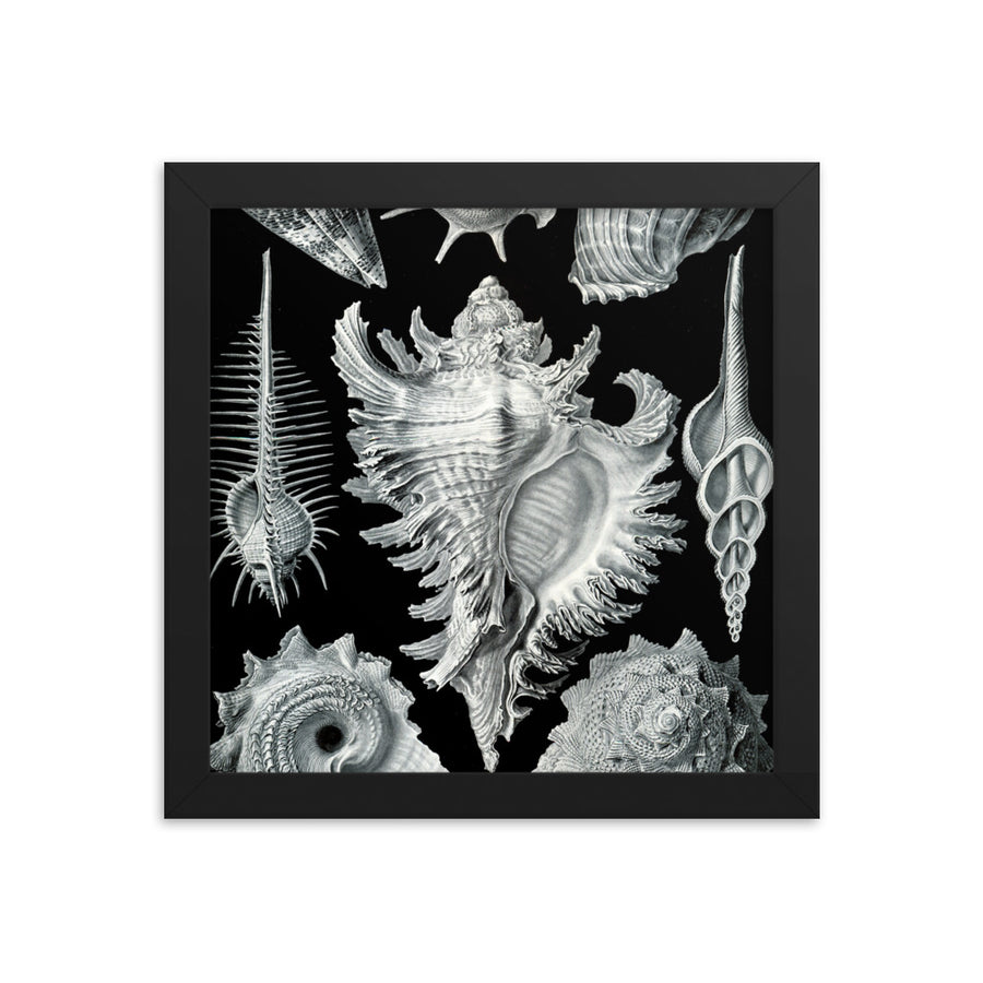 Sea Shells - Framed Print