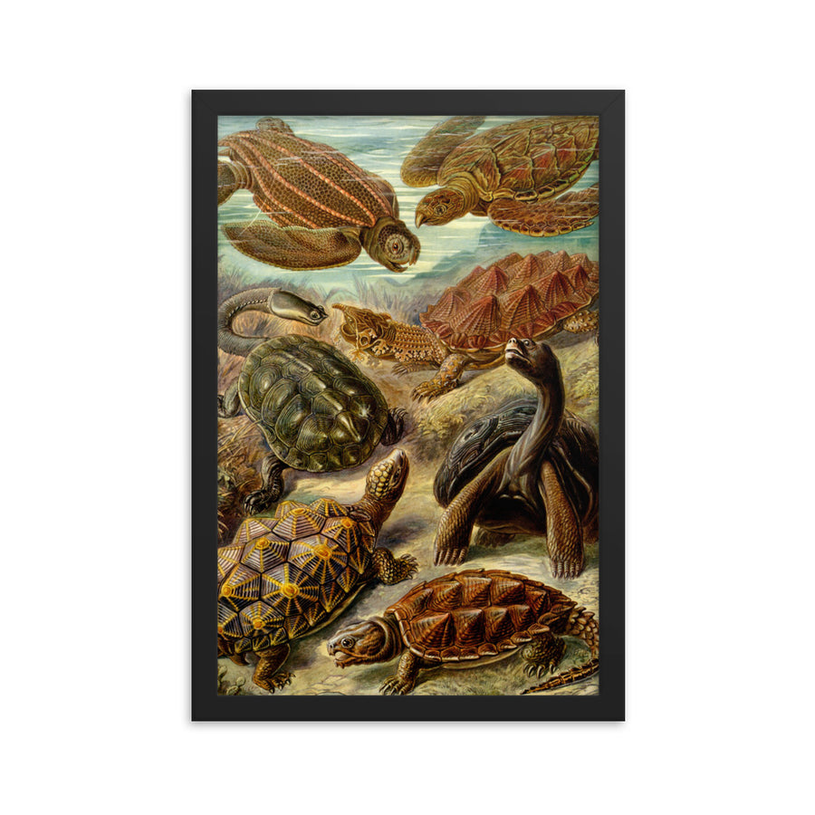 Turtles - Framed Print