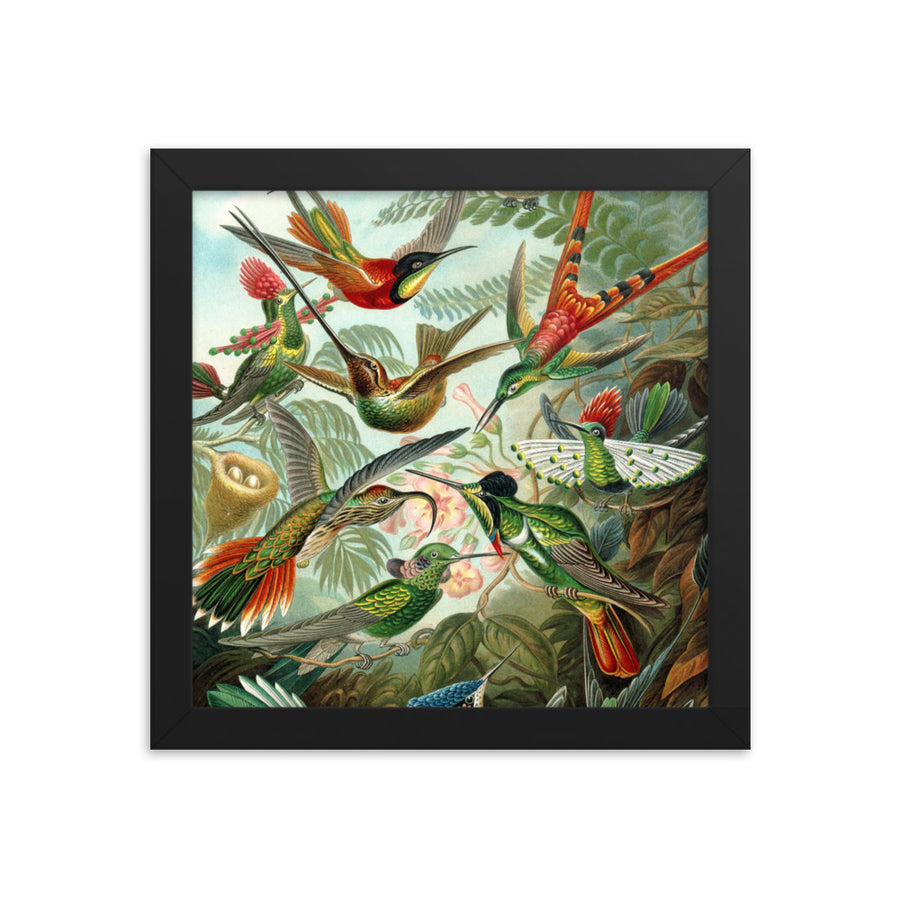 Hummingbirds - Framed Print