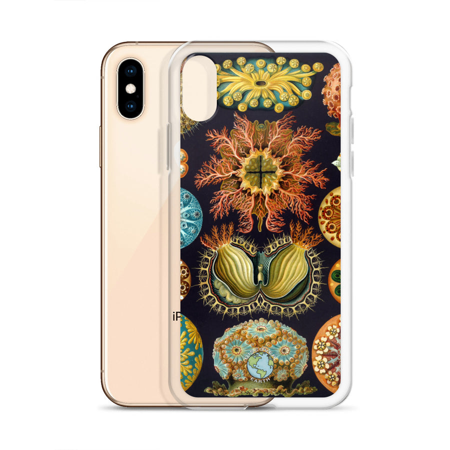 Coral - iPhone Case