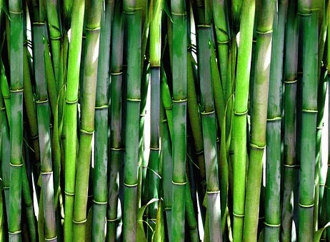 Why We So Lovingly Feature Bamboo Items