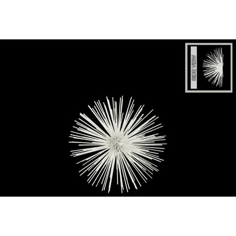 Small Ornamental Sea Urchin Sculpture - Wall Decor - White