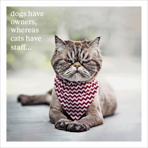 Dogs have owners, whereas cats have staff Blank Greeting Card