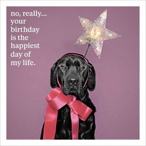 Blank greeting card, Black labrador dog, birthday