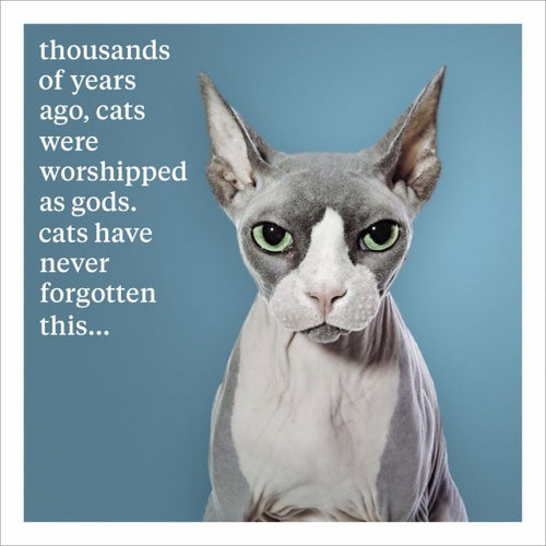Cats Never Forget Blank Greeting Card
