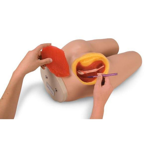 Intramuscular Injection Simulator - Shop | LivCor Australia
