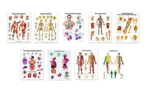 Set of 9 Anatomical Charts | 3B Anatomical - Shop | LivCor Australia