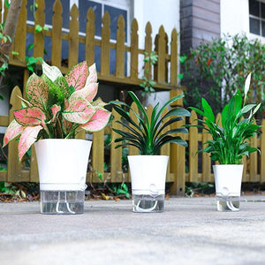 Automatic Water Absorb Flower Pot