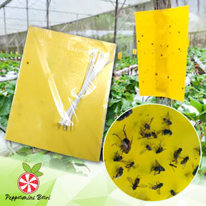 ECOSafe 2-Sided Fly Trap Board