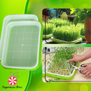 Hydroponic Home Gardening System