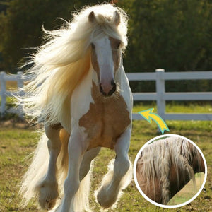 Horse Mane & Tail Detangle Treatment