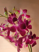 Load image into Gallery viewer, Dendrobium Orchid