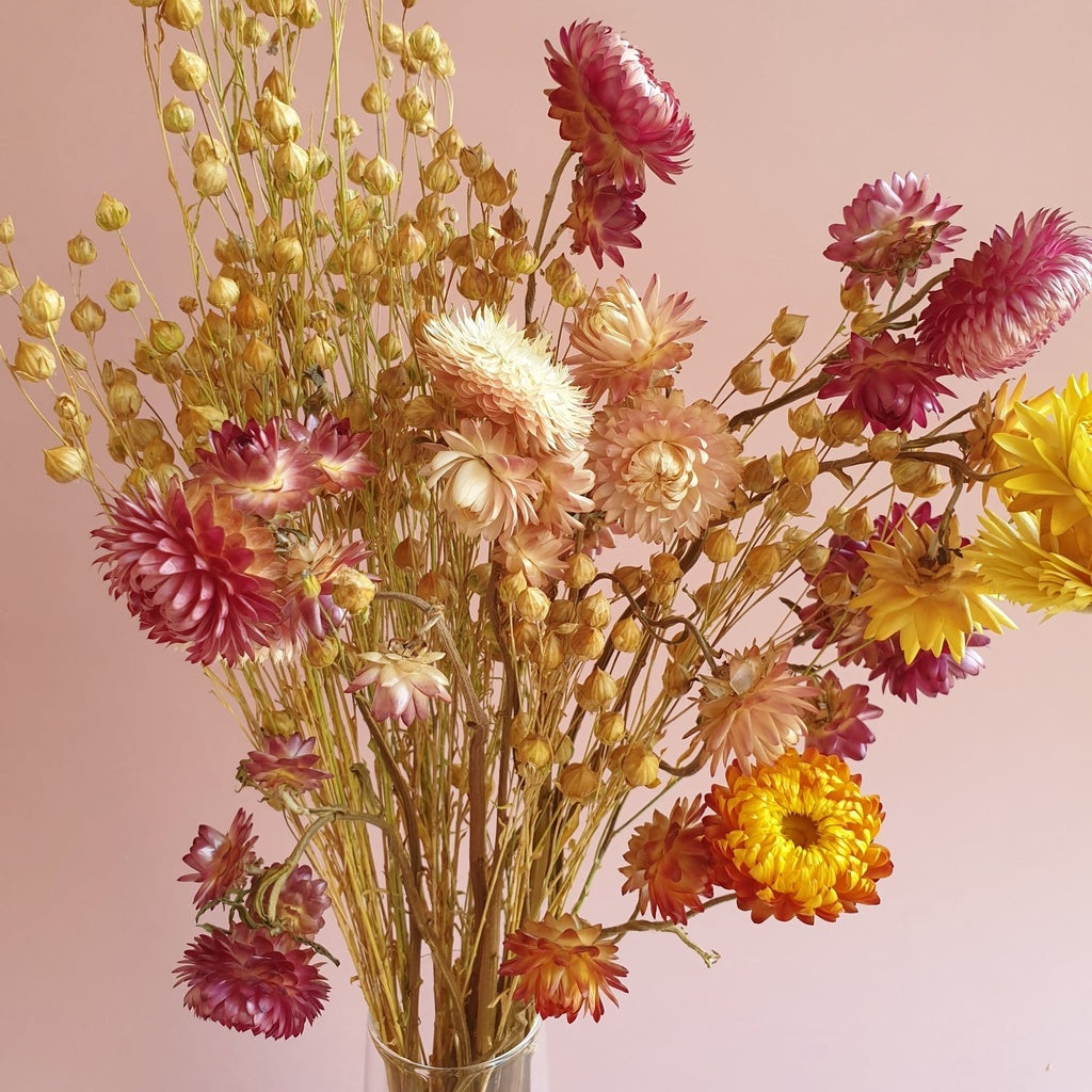 Dried Strawflowers in India Mumbai