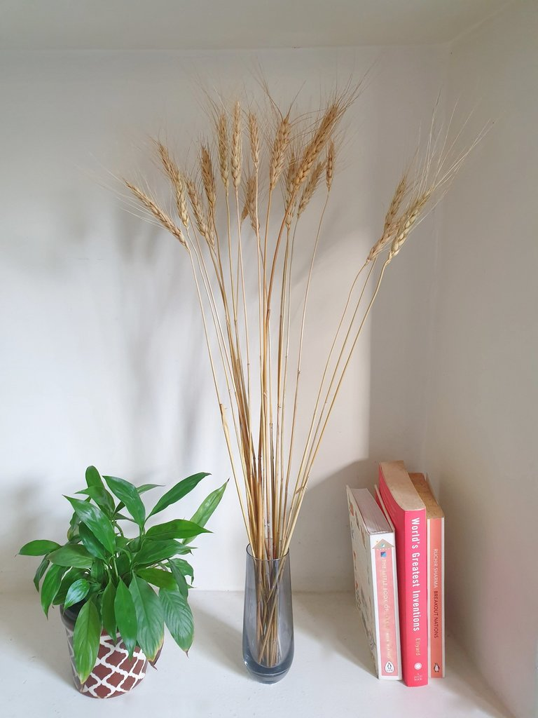 Dried Wheat Grass in vase