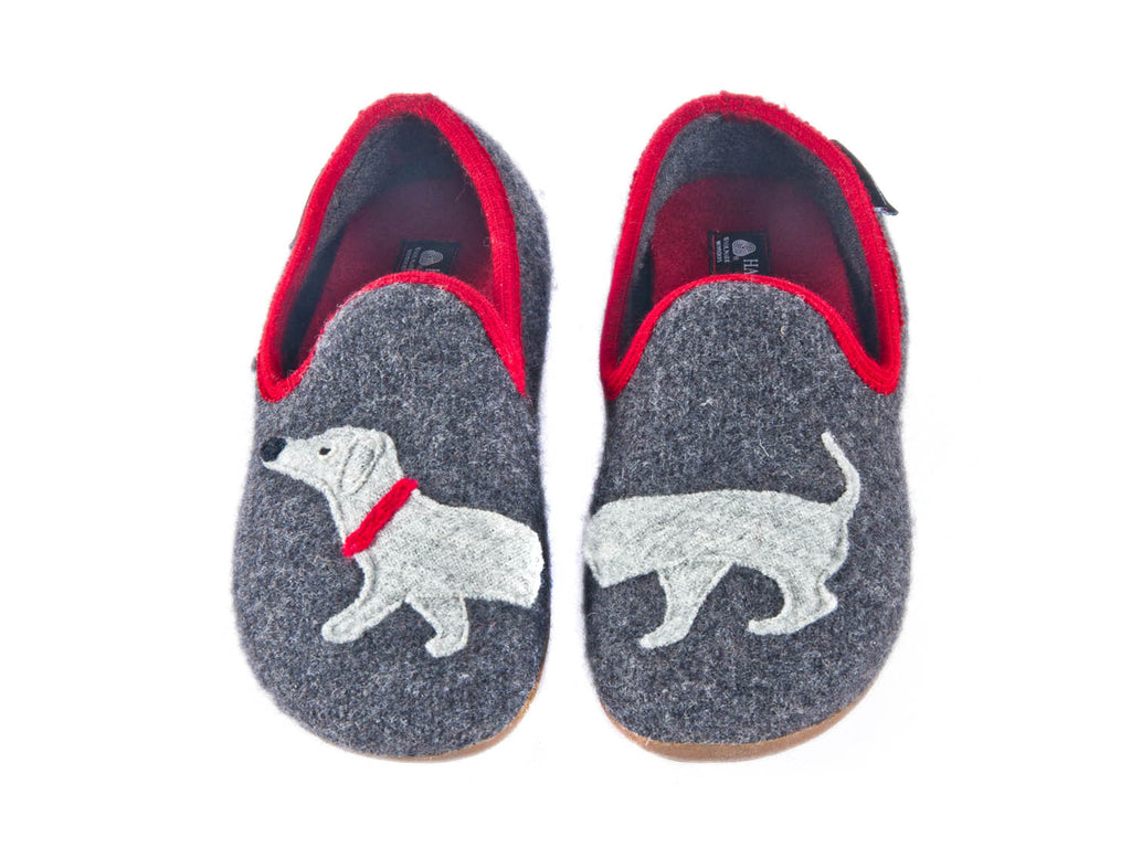 Dachshund back in slipper