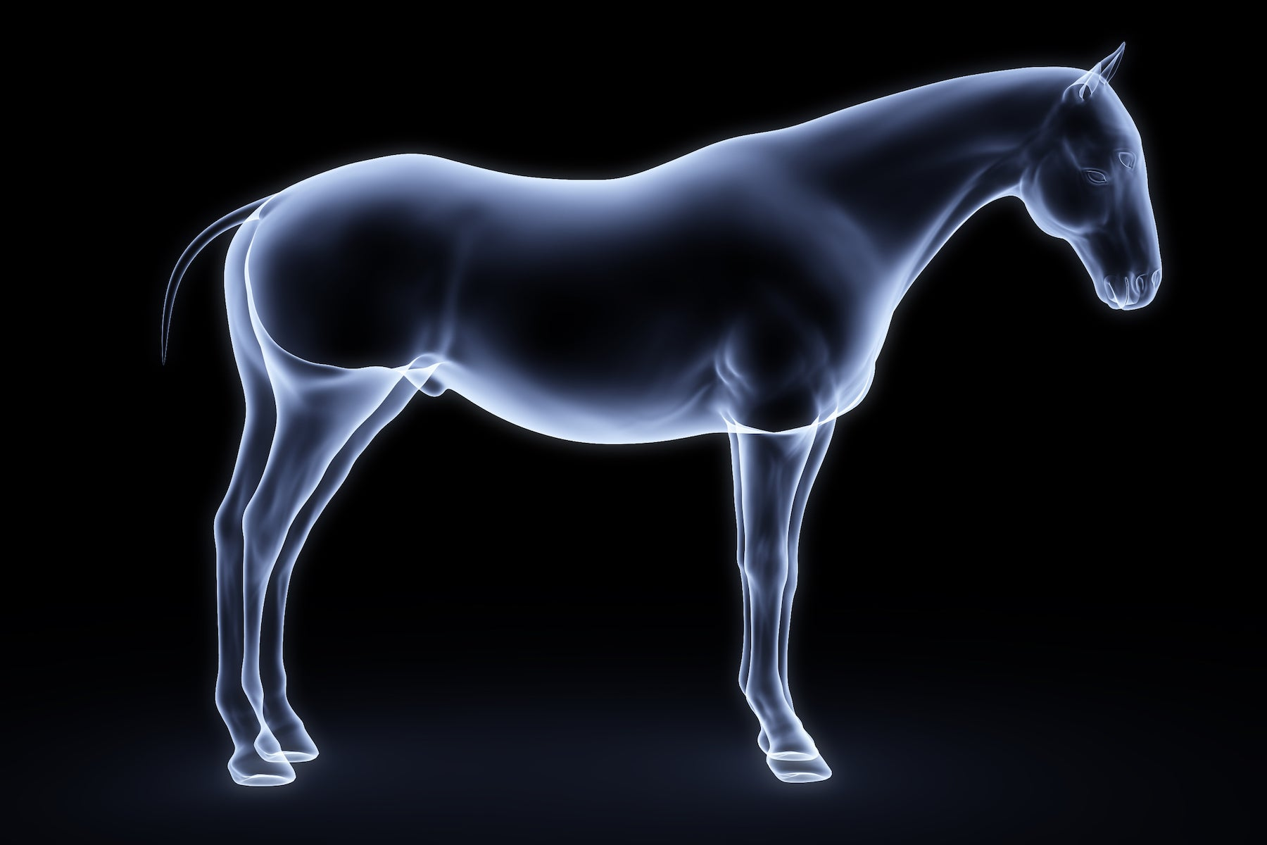 The Role of Bioelectronics In Optimising Equine Rehabilitation & Recovery