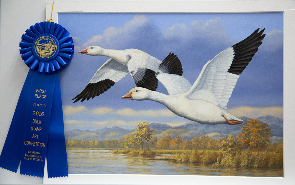 Guy wins 2016-17 California Waterfowl Stamp Competition