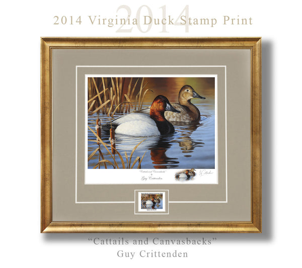 "2014-15 Virginia Duck Stamp Print - ""Cattails and Canvasbacks""  -  Low Inventory"