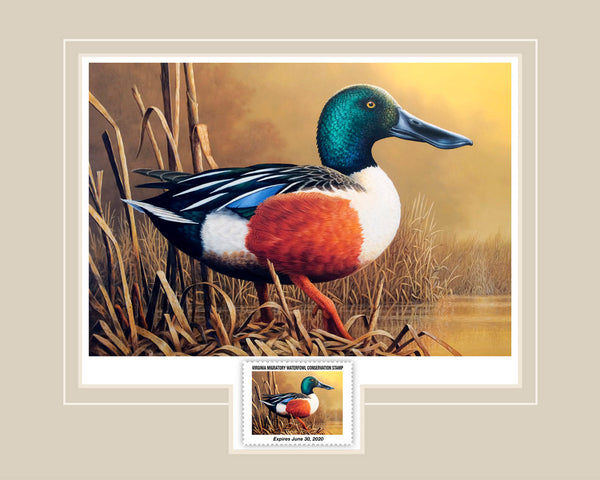 "2019 Virginia Waterfowl Conservation Stamp Print  -  The New ""Lil' Spoonie"" Print is here!"