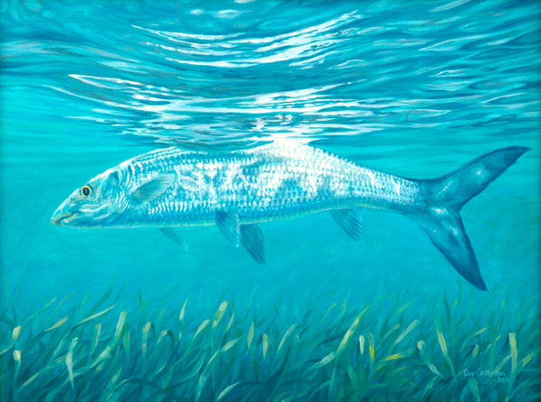"""Silver Streak"" - Bone Fish"