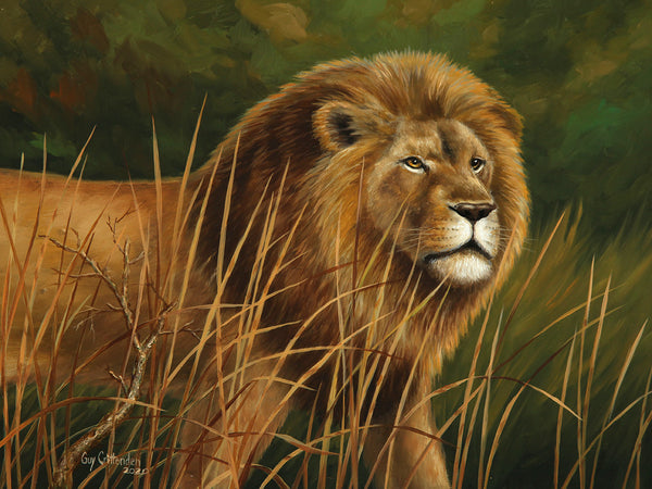 """Botswana Royalty""  -  male Lion"