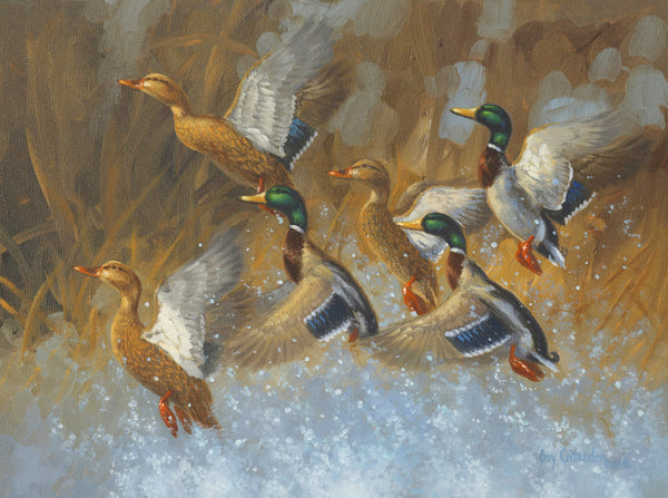 """Burst"" - Mallards  - SOLD"