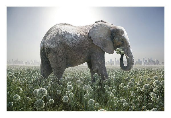 """Elephant in Onion Field"""