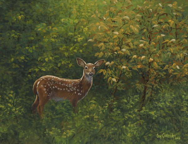 """First Summer"" - Whitetail Fawn - SOLD"
