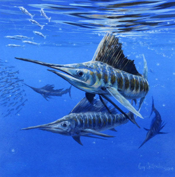 """Sailfish Study I"" - Pacific Sailfish - SOLD"