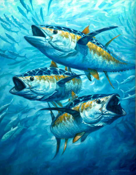 """Frenzy"" - Yellowfin Tuna and Mackerel"