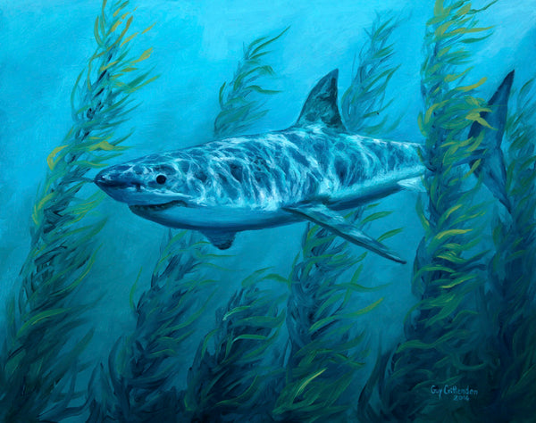 """Cruising the Kelp""  -  Great White Shark"