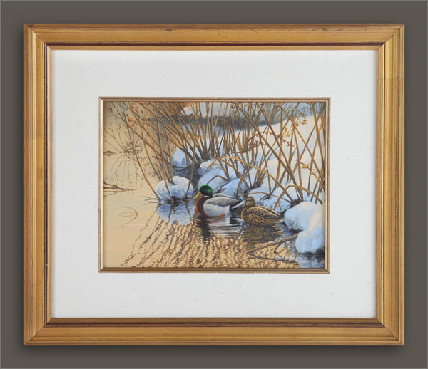"""A Quiet Spot"" - Mallards - SOLD"